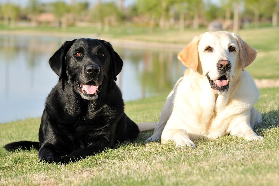 Doggie Do Right Dog Training